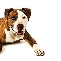 Adopt A Pet :: Mookey - Phoenix, AZ