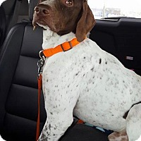 Adopt A Pet :: Ryder - Omaha, NE