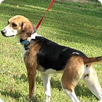 Adopt A Pet :: Maxine - Westwood, NJ