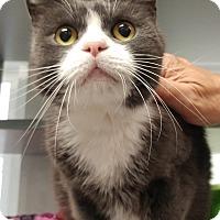 Adopt A Pet :: BoBo - Walden, NY