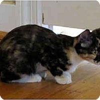 Adopt A Pet :: Dakota - Colmar, PA