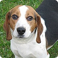 Adopt A Pet :: Duke - Indianapolis, IN