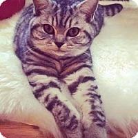 Adopt A Pet :: Wynter - Davis, CA