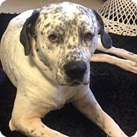 Adopt A Pet :: Doc - Tampa, FL