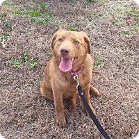 Adopt A Pet :: Coco - Murrells Inlet, SC