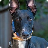 Adopt A Pet :: Hiway - Walnut Creek, CA