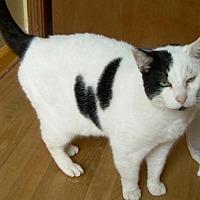 Adopt A Pet :: Lancelot - Springfield, OR