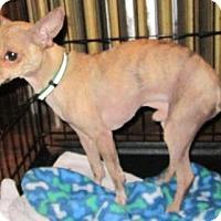 Adopt A Pet :: Gatsby - East Brunswick, NJ
