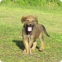 Adopt A Pet :: SAGAN - Hartford, CT