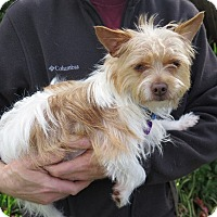 Adopt A Pet :: Charlie - Tracy, CA