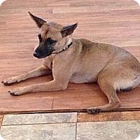 Adopt A Pet :: Eddie - Destrehan, LA