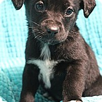 Adopt A Pet :: Cinderella - Wytheville, VA