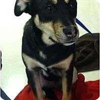 Adopt A Pet :: Dixie - Seattle, WA