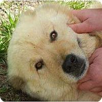 Adopt A Pet :: Goldilocks ADOPTION PENDING!! - Antioch, IL
