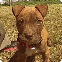 Adopt A Pet :: Rascal - Gadsden, AL
