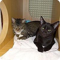 Adopt A Pet :: Rascal - Lighthouse Point, FL