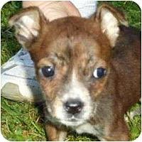 Adopt A Pet :: Izabella - P, ME