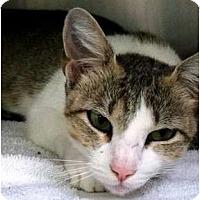 Adopt A Pet :: Momma - Nolensville, TN