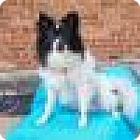 Adopt A Pet :: Samuel - Shawnee Mission, KS