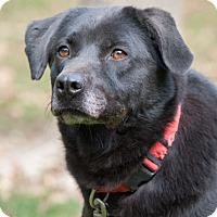 Adopt A Pet :: Fan - Lewisville, IN
