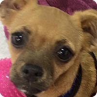 Adopt A Pet :: GINGER - Odessa, FL