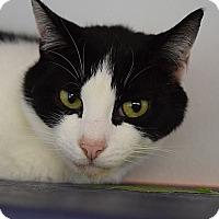 Adopt A Pet :: Simba - Canastota, NY