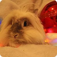 Adopt A Pet :: Sugar - Hillside, NJ