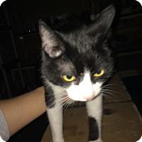 Adopt A Pet :: Sylvester - Columbus, OH