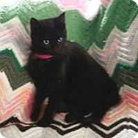 Adopt A Pet :: Nora - Lebanon, PA