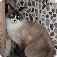 Adopt A Pet :: Boris Base - Mission, KS
