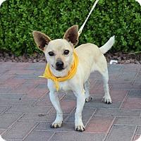 Adopt A Pet :: PAULY - Las Vegas, NV
