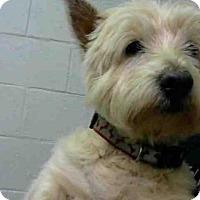 Adopt A Pet :: TOPPER - Atlanta, GA