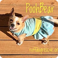 Adopt A Pet :: Pooh Bear - Milton, GA