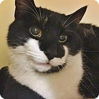 Adopt A Pet :: Orca - Salisbury, MA