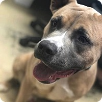 Adopt A Pet :: moose - Marion, IN