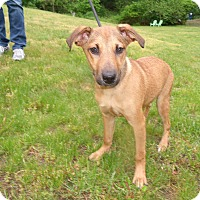 Adopt A Pet :: TigerLiLLy - Worcester, MA