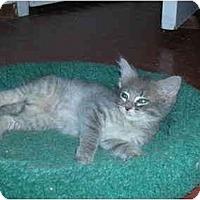 Adopt A Pet :: Beauty - Davis, CA
