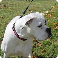 Adopt A Pet :: Lola - ARDEN, NC