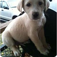 Adopt A Pet :: Pooch - Glastonbury, CT