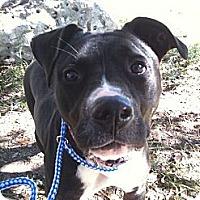 Adopt A Pet :: Scarlet - Spring Branch, TX