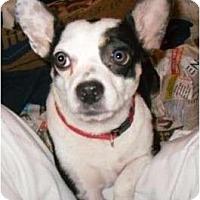 Adopt A Pet :: Minnie - Auburn, CA