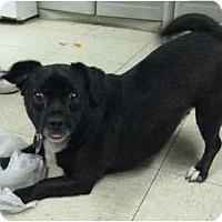 Adopt A Pet :: Preston - Cleveland, OH