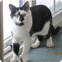 Adopt A Pet :: Floyd - Catasauqua, PA