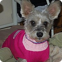 Adopt A Pet :: Clover - Hazard, KY