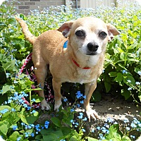 Adopt A Pet :: Max - Xenia, OH