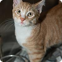 Adopt A Pet :: Antony - New York, NY