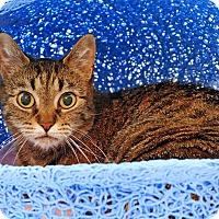 Adopt A Pet :: Anna - Victor, NY