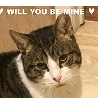 Adopt A Pet :: BARCLAY-Just Stunning&Loving - New York, NY