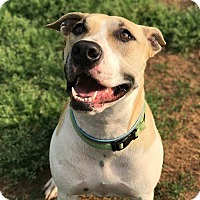 Adopt A Pet :: Maggie (2) - Fort Valley, GA