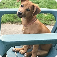 Adopt A Pet :: Sissy meet me 4/21 - Manchester, CT